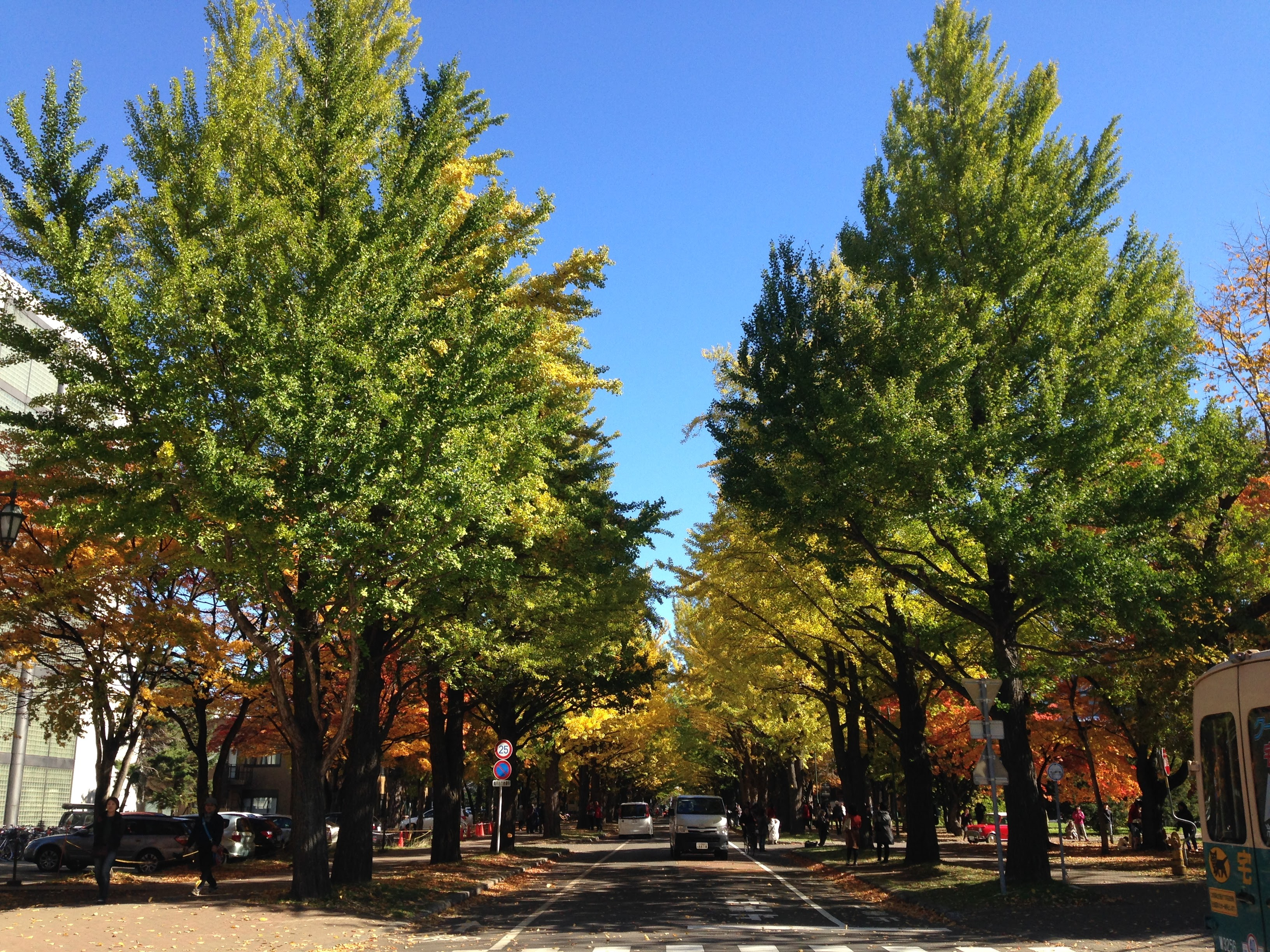 北海道大学の紅葉(10月)。ちょっと外国みたい!Beautiful Autumn leaves!!!! @Hokkaido University in Oct.